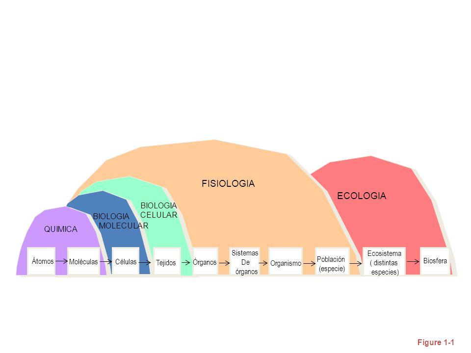 Figure 1-1 BIOLOGIA CELULAR Átomos Moléculas Células Tejidos Órganos Sistemas De órganos Organismo Población (especie) Ecosistema ( distintas especies