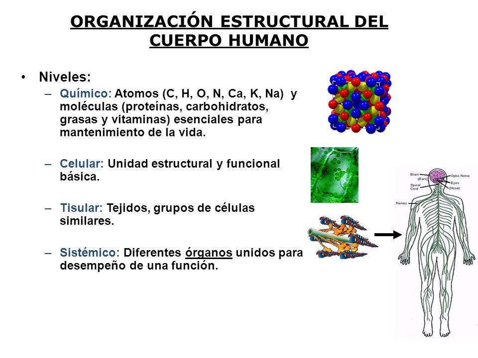 Niveles: –Químico: Atomos (C, H, O, N, Ca, K, Na) y moléculas (proteínas, carbohidratos, grasas y vitaminas) esenciales para mantenimiento de la vida.
