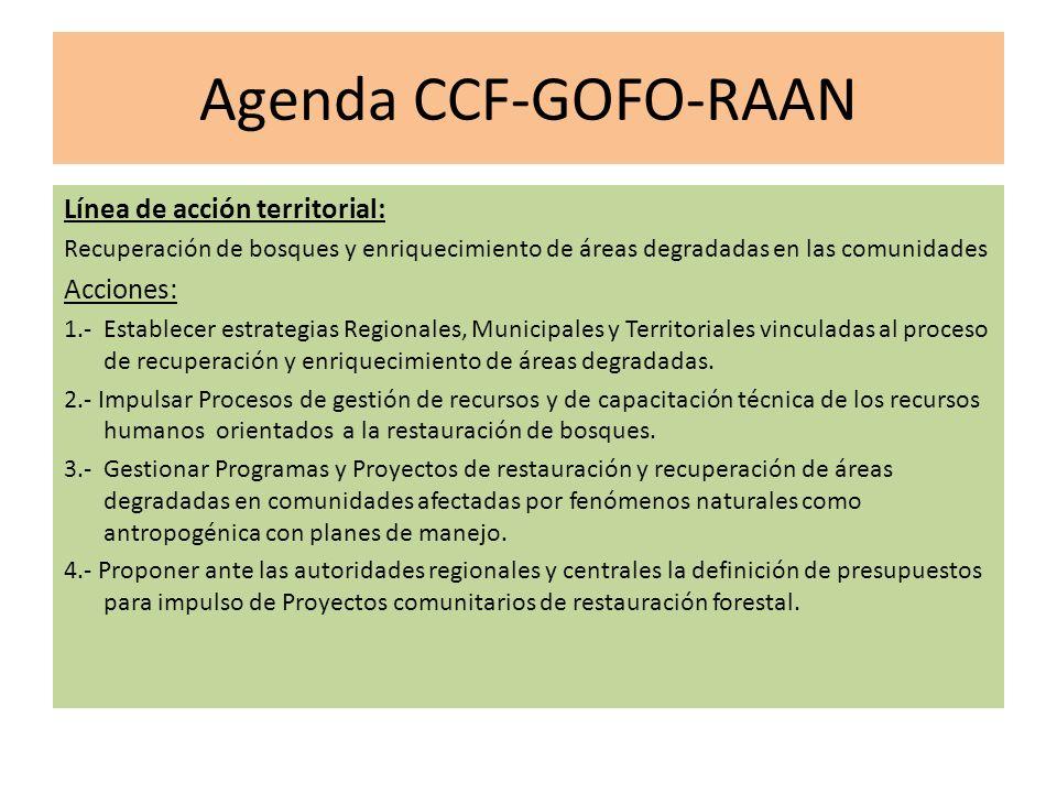 Agenda CCF-GOFO-RAAN Línea de acción territorial: Recuperación de bosques y enriquecimiento de áreas degradadas en las comunidades Acciones: 1.- Establecer estrategias Regionales, Municipales y Territoriales vinculadas al proceso de recuperación y enriquecimiento de áreas degradadas.