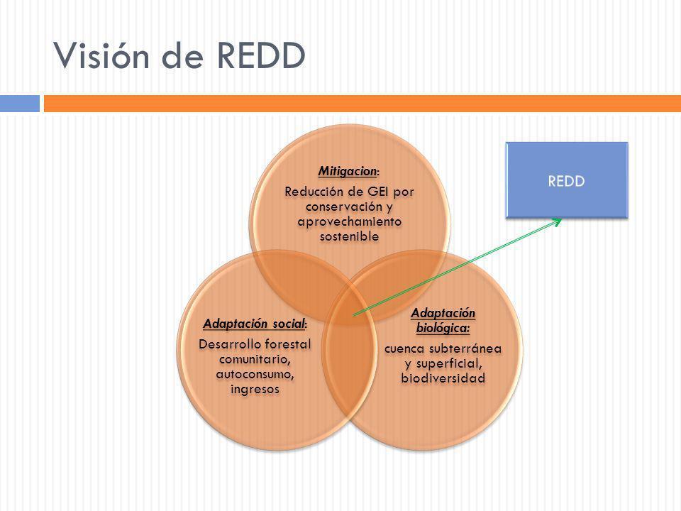 Visión de REDD Mitigacion: Reducción de GEI por conservación y aprovechamiento sostenible Adaptación biológica: cuenca subterránea y superficial, biod