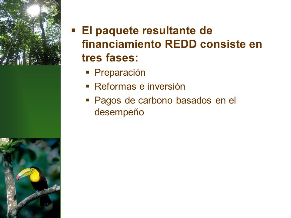 El paquete resultante de financiamiento REDD consiste en tres fases: Preparación Reformas e inversión Pagos de carbono basados en el desempeño