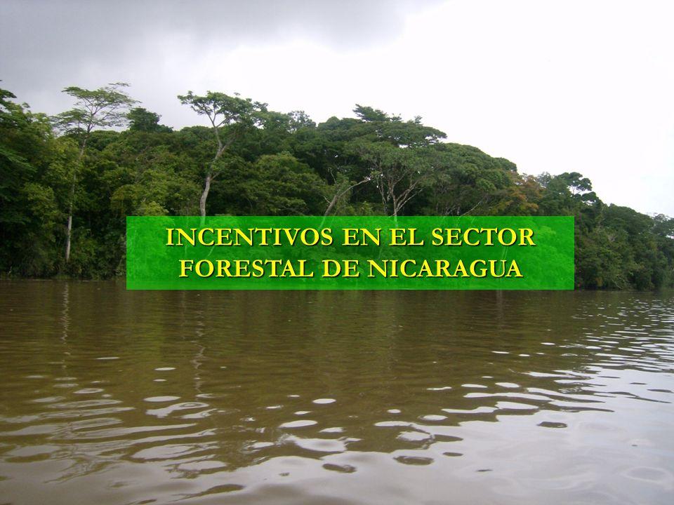 INCENTIVOS EN EL SECTOR FORESTAL DE NICARAGUA