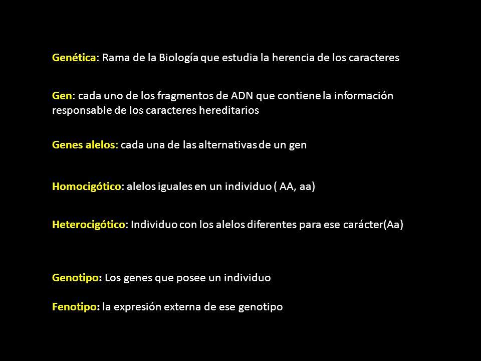 Genética: Rama de la Biología que estudia la herencia de los caracteres Gen: cada uno de los fragmentos de ADN que contiene la información responsable de los caracteres hereditarios Genes alelos: cada una de las alternativas de un gen Homocigótico: alelos iguales en un individuo ( AA, aa) Heterocigótico: Individuo con los alelos diferentes para ese carácter(Aa) Genotipo: Los genes que posee un individuo Fenotipo: la expresión externa de ese genotipo