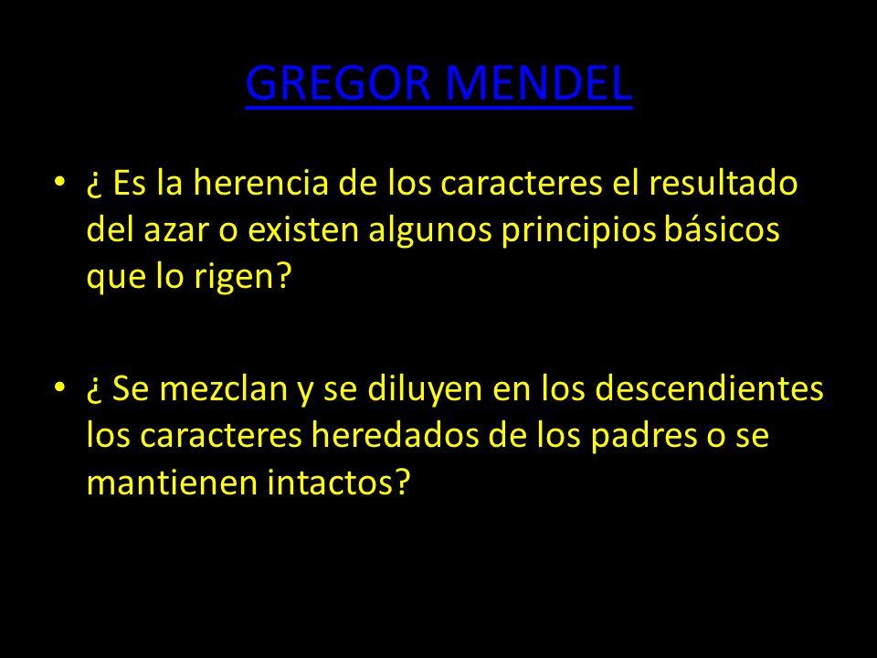 GREGOR MENDEL ¿ Es la herencia de los caracteres el resultado del azar o existen algunos principios básicos que lo rigen.