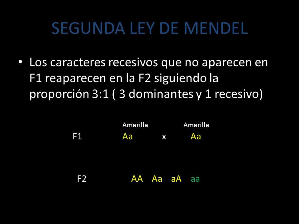 SEGUNDA LEY DE MENDEL Los caracteres recesivos que no aparecen en F1 reaparecen en la F2 siguiendo la proporción 3:1 ( 3 dominantes y 1 recesivo) F1 Aa x Aa F2 AA Aa aA aa Amarilla Amarilla