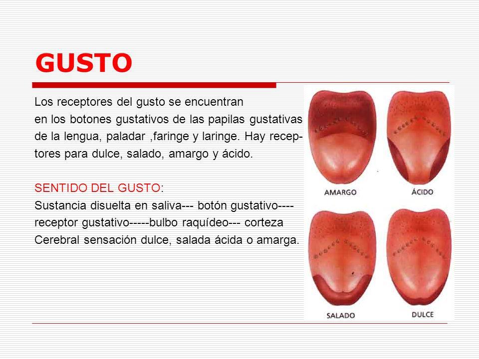 GUSTO Los receptores del gusto se encuentran en los botones gustativos de las papilas gustativas de la lengua, paladar,faringe y laringe. Hay recep- t