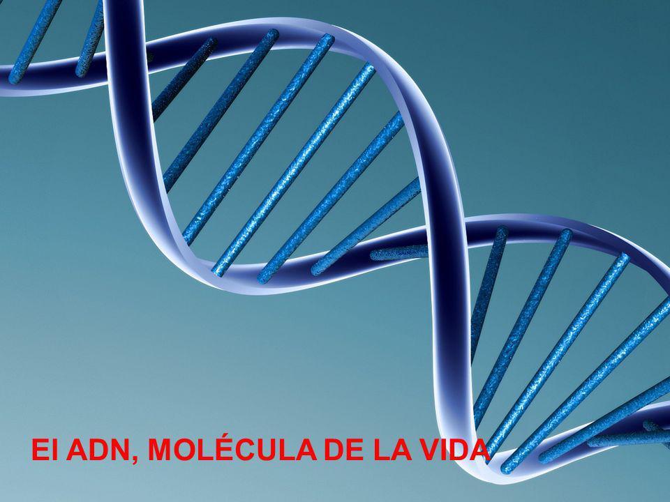 El ADN, MOLÉCULA DE LA VIDA