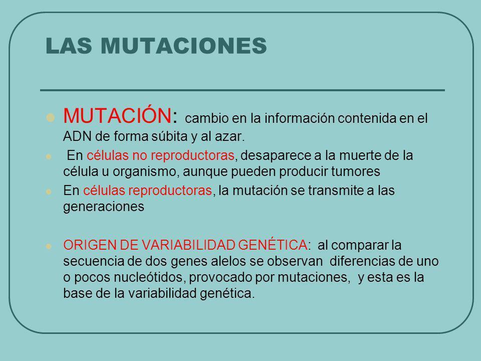 LAS MUTACIONES MUTACIÓN: cambio en la información contenida en el ADN de forma súbita y al azar. En células no reproductoras, desaparece a la muerte d