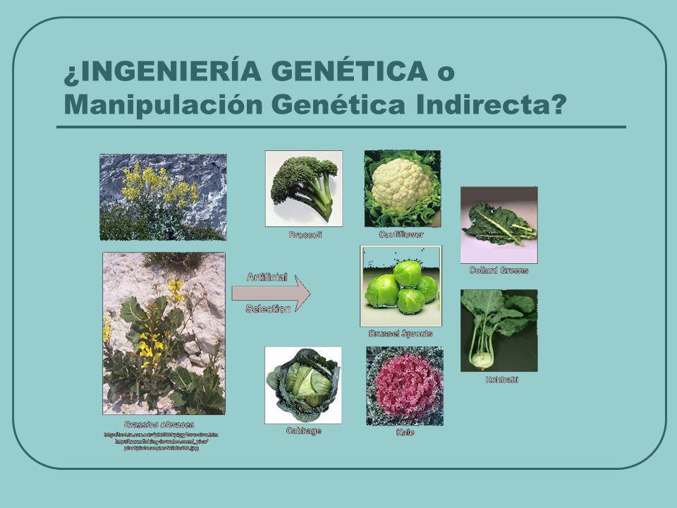 ¿INGENIERÍA GENÉTICA o Manipulación Genética Indirecta?