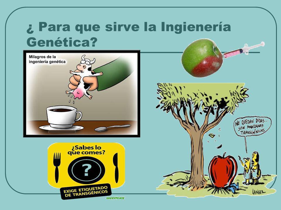 ¿ Para que sirve la Ingienería Genética?
