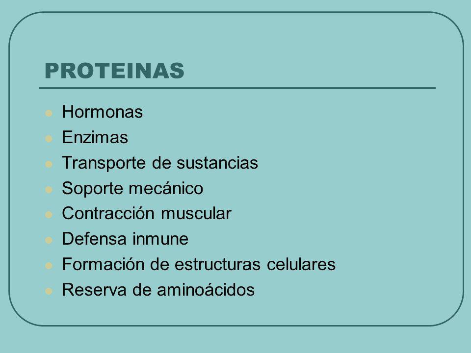 PROTEINAS Hormonas Enzimas Transporte de sustancias Soporte mecánico Contracción muscular Defensa inmune Formación de estructuras celulares Reserva de