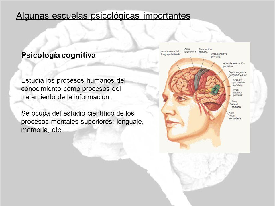 Algunas escuelas psicológicas importantes Psicología cognitiva Estudia los procesos humanos del conocimiento como procesos del tratamiento de la infor