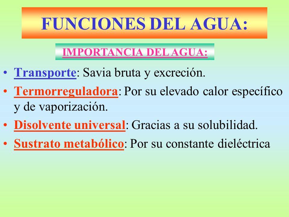 FUNCIONES DEL AGUA: Transporte: Savia bruta y excreción. Termorreguladora: Por su elevado calor específico y de vaporización. Disolvente universal: Gr