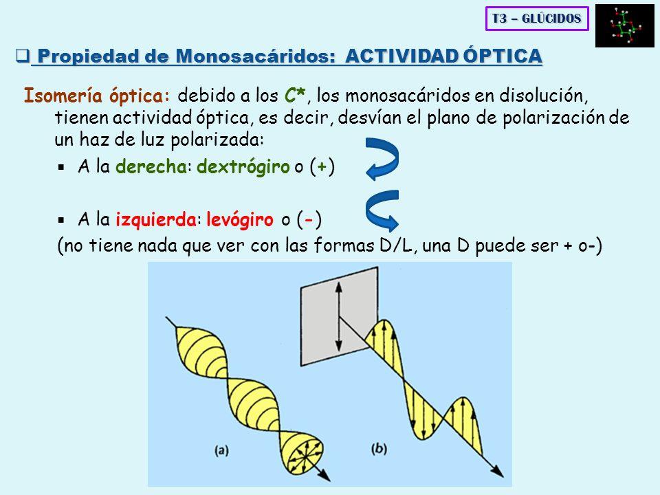 Isomería óptica: debido a los C*, los monosacáridos en disolución, tienen actividad óptica, es decir, desvían el plano de polarización de un haz de lu