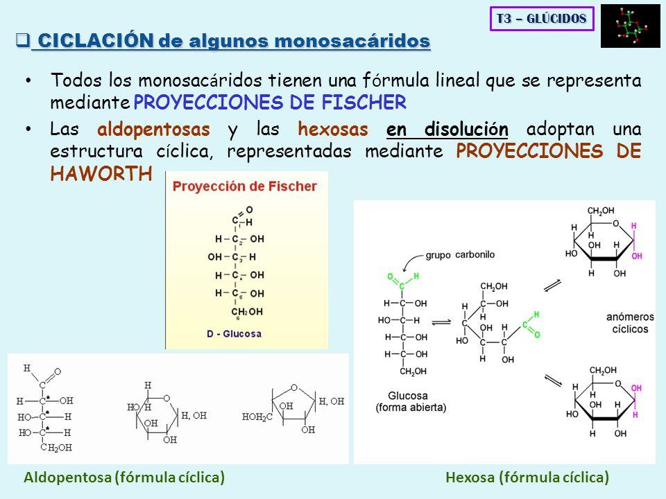 Todos los monosac á ridos tienen una f ó rmula lineal que se representa mediante PROYECCIONES DE FISCHER Las aldopentosas y las hexosas en disoluci ó