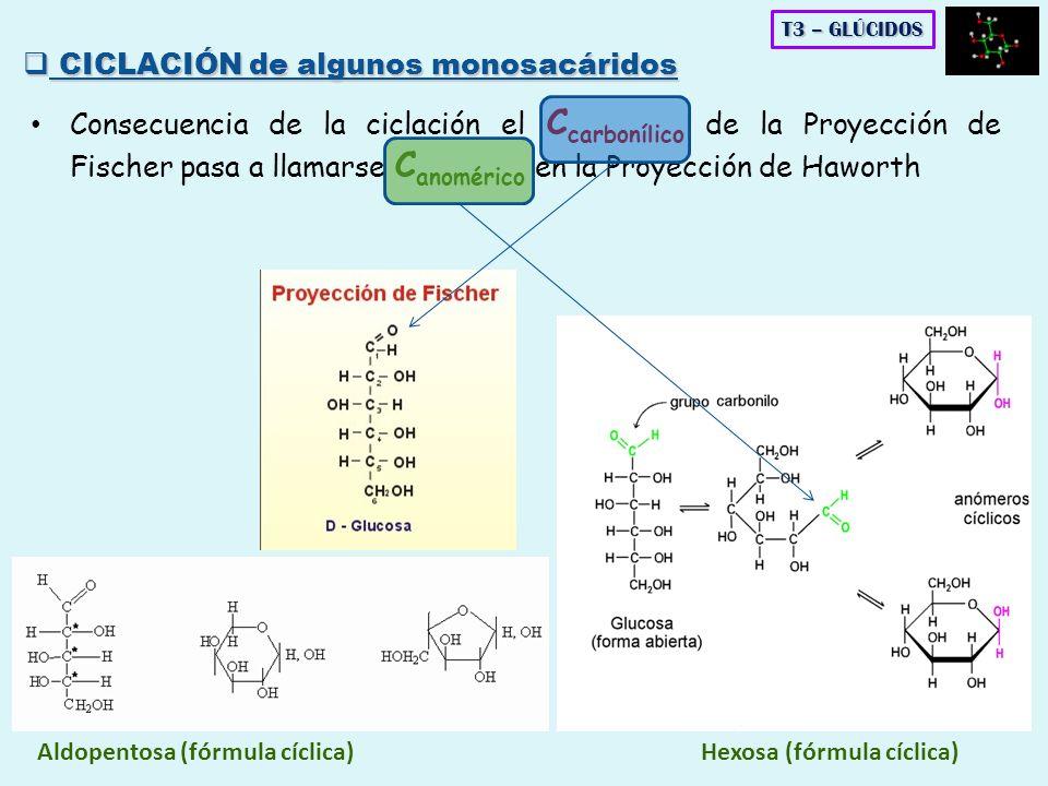 Consecuencia de la ciclación el C carbonílico de la Proyección de Fischer pasa a llamarse C anomérico en la Proyección de Haworth Aldopentosa (fórmula