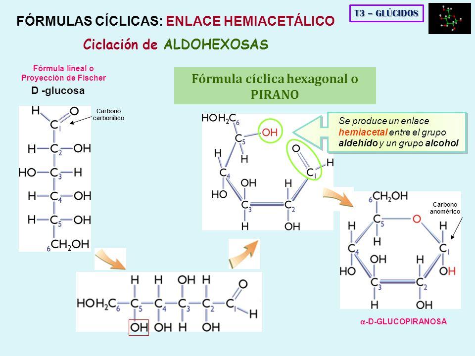 D -glucosa Se produce un enlace hemiacetal entre el grupo aldehído y un grupo alcohol Fórmula lineal o Proyección de Fischer Fórmula cíclica hexagonal