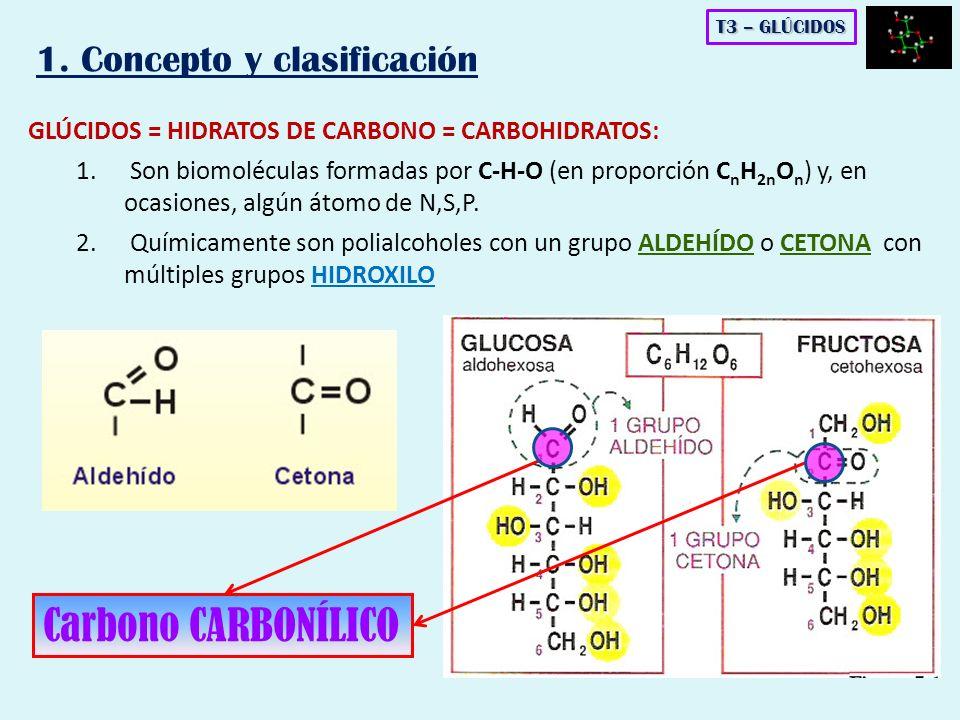 H2OH2O OH HO Enlace α(1-4) - O -glucosídico Enlace α(1-2) - O -glucosídico ENLACE MONOCARBONÍLICO OH HO ENLACE DICARBONÍLICO LOS DISACÁRIDOS: Enlace O - GLUCOSÍDICO T3 – GLÚCIDOS
