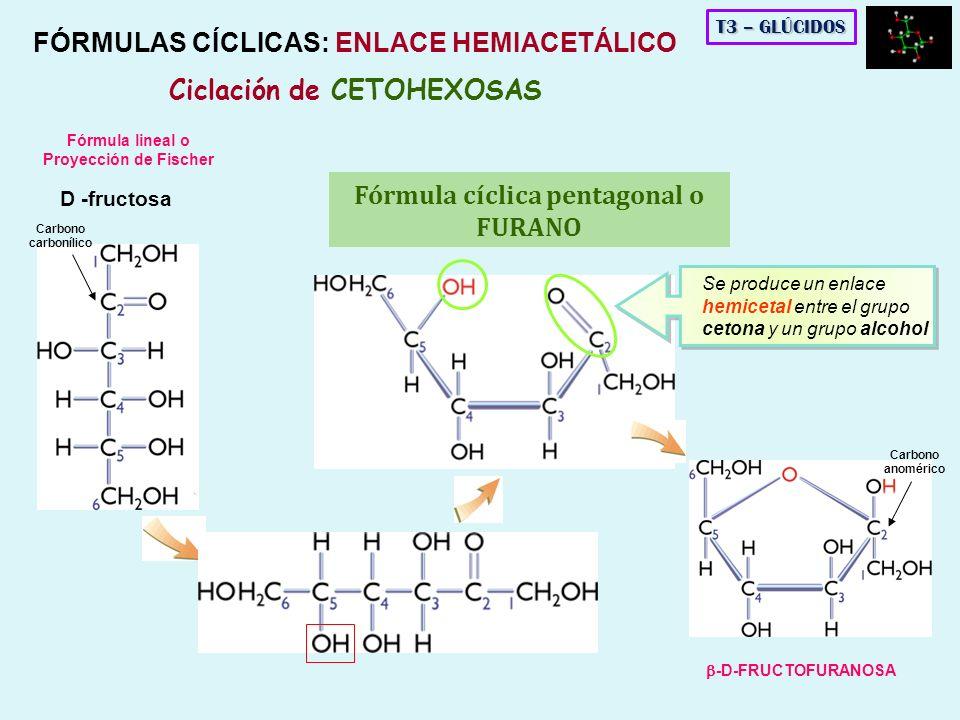 D -fructosa Se produce un enlace hemicetal entre el grupo cetona y un grupo alcohol Fórmula lineal o Proyección de Fischer FÓRMULAS CÍCLICAS: ENLACE H