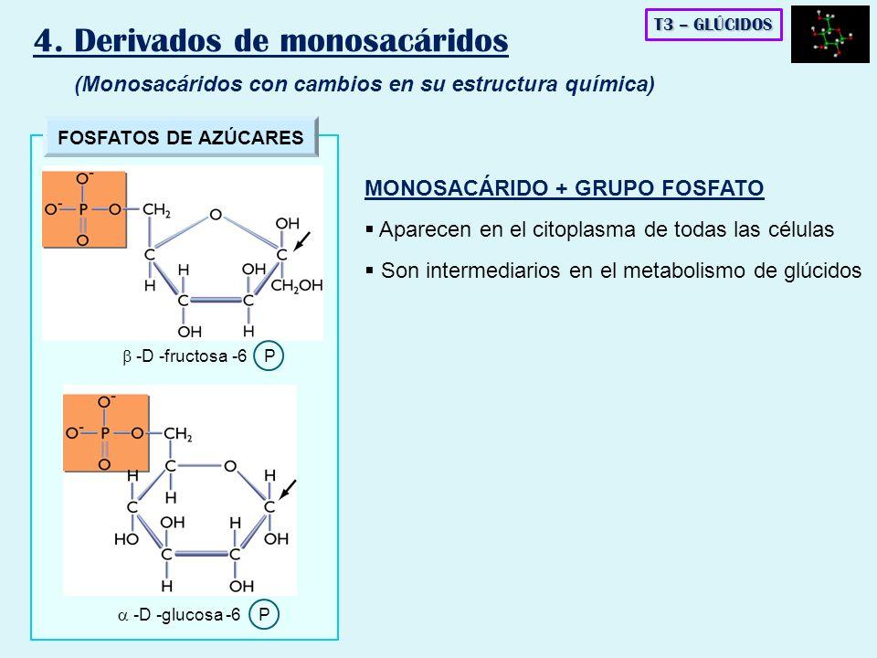 FOSFATOS DE AZÚCARES -D -glucosa -6 P -D -fructosa -6 P T3 – GLÚCIDOS 4. Derivados de monosacáridos (Monosacáridos con cambios en su estructura químic