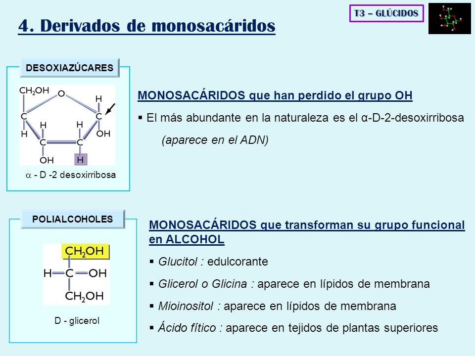 DESOXIAZÚCARES - D -2 desoxirribosa POLIALCOHOLES D - glicerol T3 – GLÚCIDOS 4. Derivados de monosacáridos MONOSACÁRIDOS que han perdido el grupo OH E