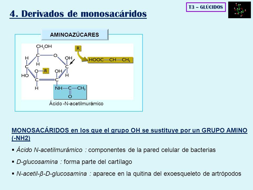 AMINOAZÚCARES Ácido -N-acetilmurámico T3 – GLÚCIDOS 4. Derivados de monosacáridos MONOSACÁRIDOS en los que el grupo OH se sustituye por un GRUPO AMINO
