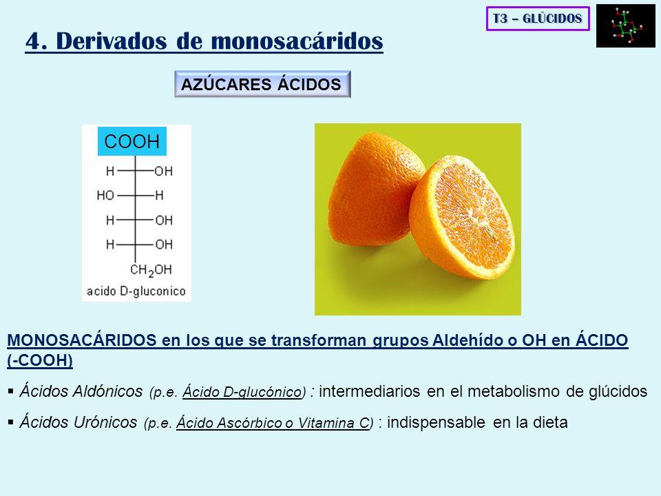 T3 – GLÚCIDOS 4. Derivados de monosacáridos MONOSACÁRIDOS en los que se transforman grupos Aldehído o OH en ÁCIDO (-COOH) Ácidos Aldónicos (p.e. Ácido
