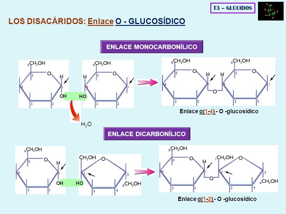H2OH2O OH HO Enlace α(1-4) - O -glucosídico Enlace α(1-2) - O -glucosídico ENLACE MONOCARBONÍLICO OH HO ENLACE DICARBONÍLICO LOS DISACÁRIDOS: Enlace O