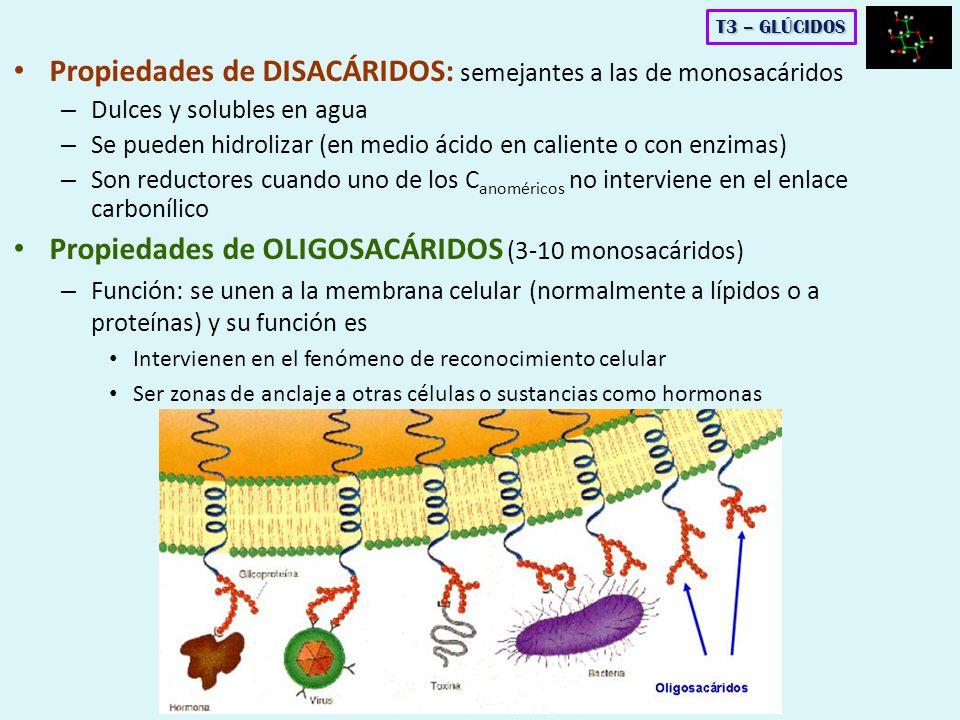 Propiedades de DISACÁRIDOS: semejantes a las de monosacáridos – Dulces y solubles en agua – Se pueden hidrolizar (en medio ácido en caliente o con enz