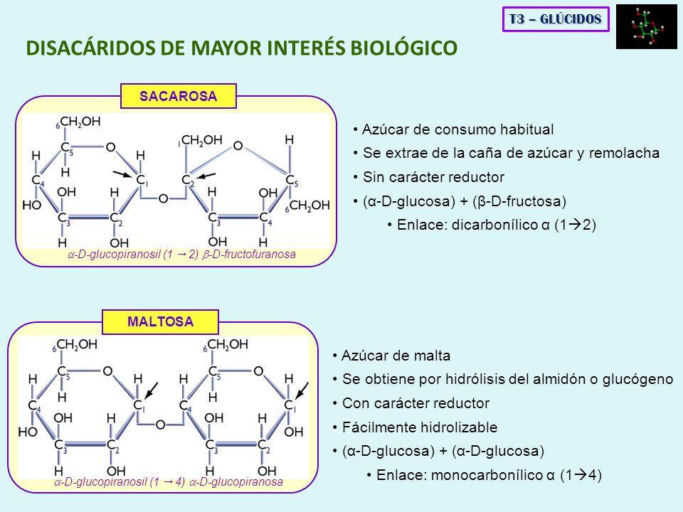 DISACÁRIDOS DE MAYOR INTERÉS BIOLÓGICO MALTOSA -D-glucopiranosil (1 4) -D-glucopiranosa SACAROSA -D-glucopiranosil (1 2) -D-fructofuranosa T3 – GLÚCID