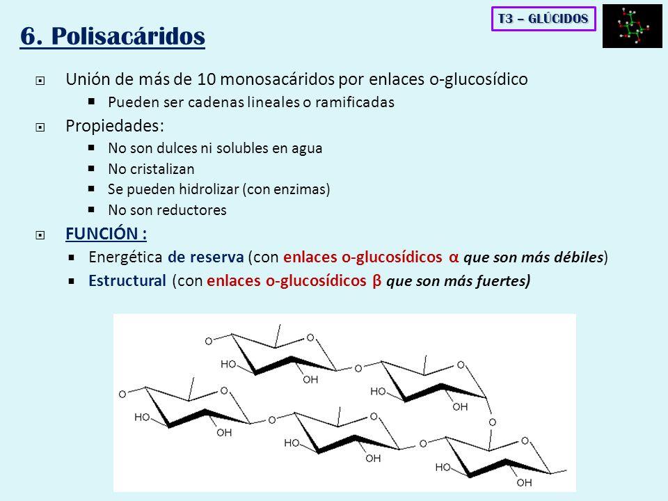 Unión de más de 10 monosacáridos por enlaces o-glucosídico Pueden ser cadenas lineales o ramificadas Propiedades: No son dulces ni solubles en agua No