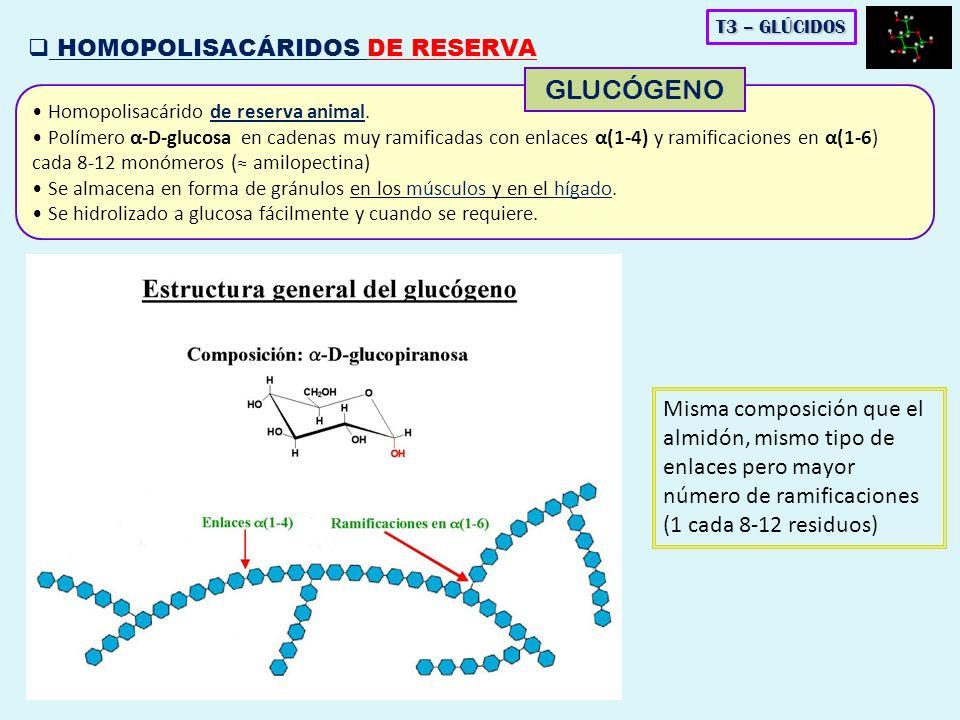 Homopolisacárido de reserva animal. Polímero α-D-glucosa en cadenas muy ramificadas con enlaces α(1-4) y ramificaciones en α(1-6) cada 8-12 monómeros