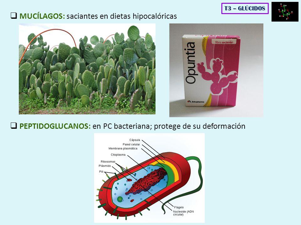 MUCÍLAGOS: saciantes en dietas hipocalóricas PEPTIDOGLUCANOS: en PC bacteriana; protege de su deformación T3 – GLÚCIDOS