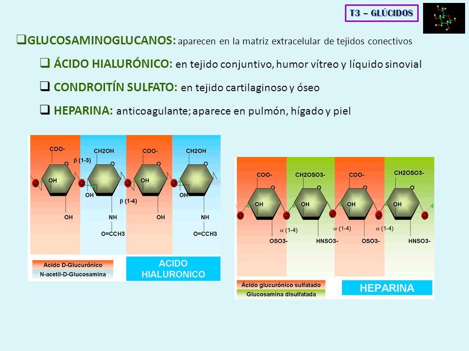 GLUCOSAMINOGLUCANOS: aparecen en la matriz extracelular de tejidos conectivos ÁCIDO HIALURÓNICO: en tejido conjuntivo, humor vítreo y líquido sinovial
