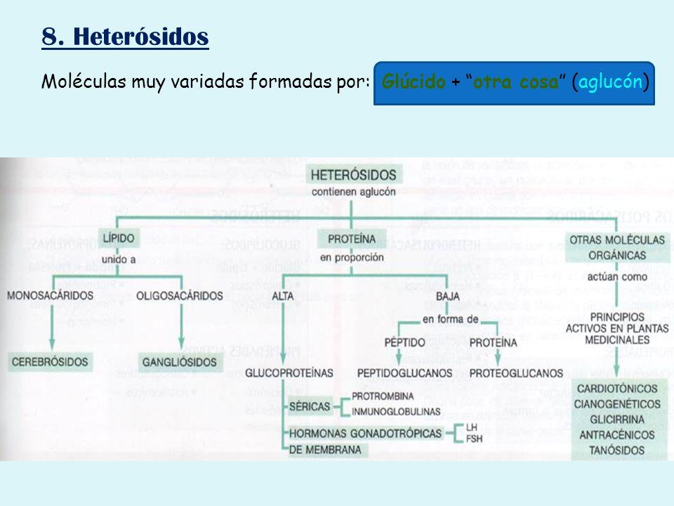 8. Heterósidos Moléculas muy variadas formadas por: Glúcido + otra cosa (aglucón)
