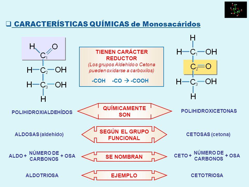 QUÍMICAMENTE SON POLIHIDROXICETONAS POLIHIDROXIALDEHÍDOS SEGÚN EL GRUPO FUNCIONAL CETOSAS (cetona)ALDOSAS (aldehído) TIENEN CARÁCTER REDUCTOR (Los gru