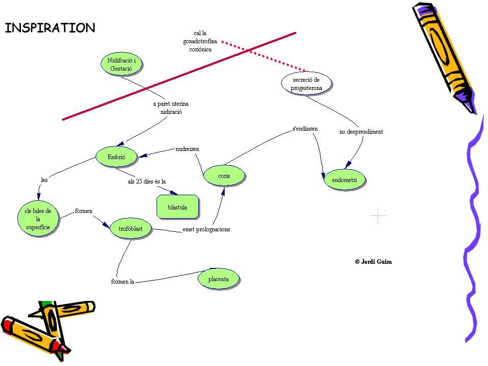 Mi trabajo actual En Formación Profesional: Utilizar los mapas conceptuales con la metodología de PBL.
