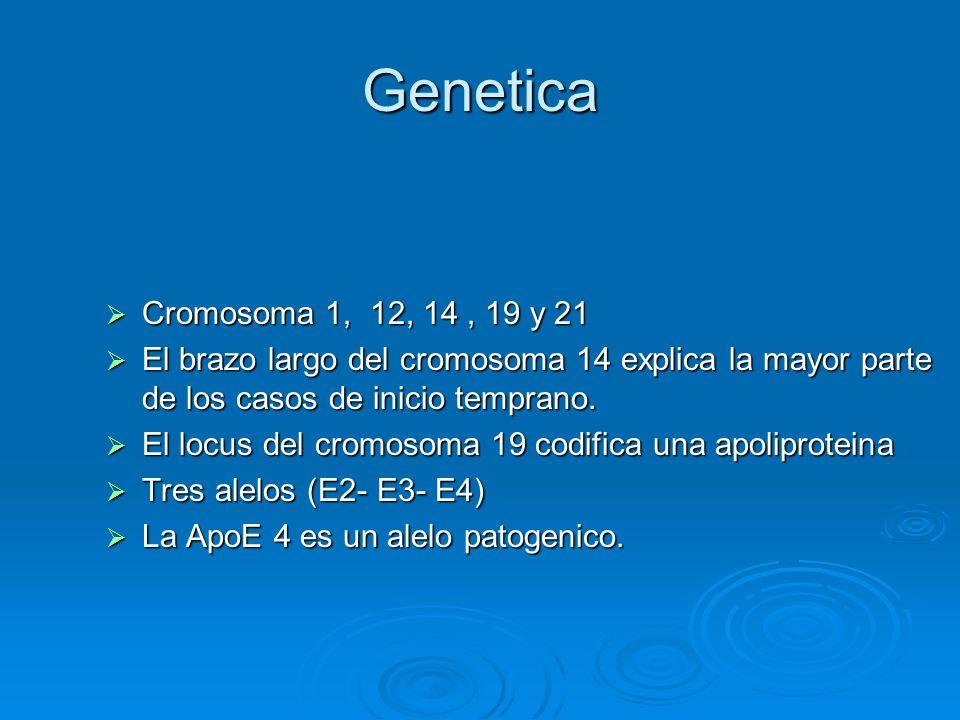 Genetica Cromosoma 1, 12, 14, 19 y 21 Cromosoma 1, 12, 14, 19 y 21 El brazo largo del cromosoma 14 explica la mayor parte de los casos de inicio tempr