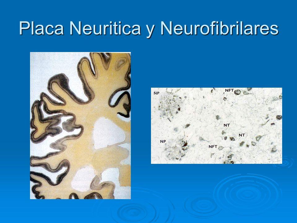 Placa Neuritica y Neurofibrilares