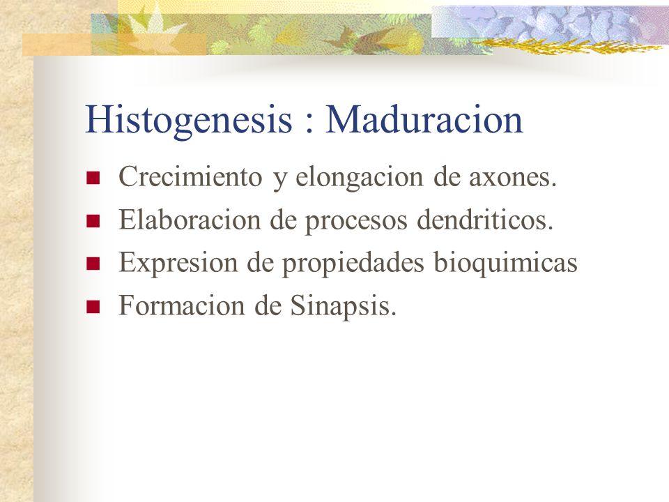 Histogenesis : Maduracion Crecimiento y elongacion de axones. Elaboracion de procesos dendriticos. Expresion de propiedades bioquimicas Formacion de S
