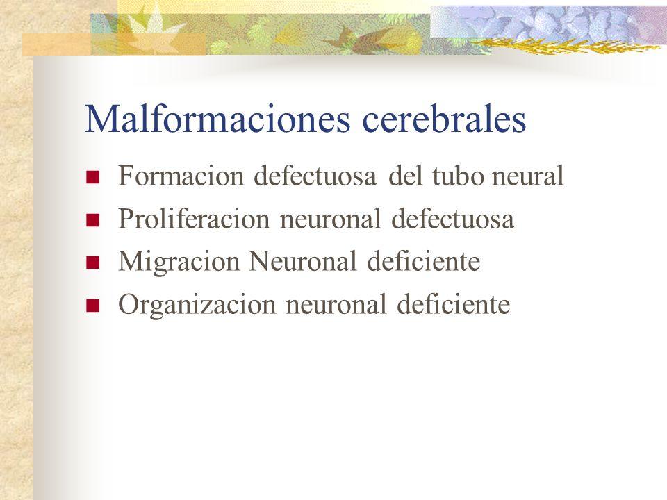 Malformaciones cerebrales Formacion defectuosa del tubo neural Proliferacion neuronal defectuosa Migracion Neuronal deficiente Organizacion neuronal d