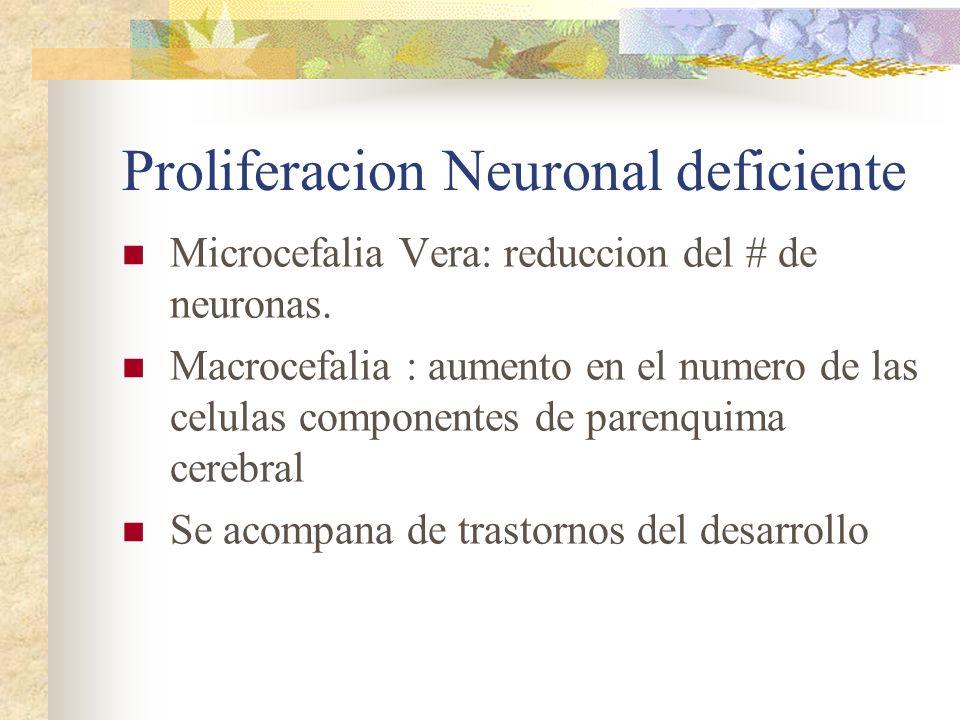 Proliferacion Neuronal deficiente Microcefalia Vera: reduccion del # de neuronas. Macrocefalia : aumento en el numero de las celulas componentes de pa