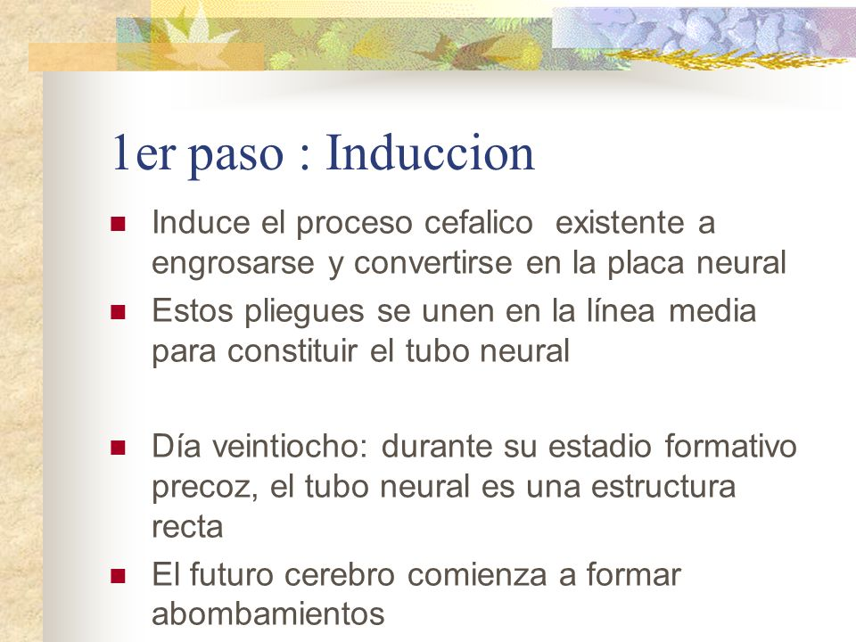 1er paso : Induccion Induce el proceso cefalico existente a engrosarse y convertirse en la placa neural Estos pliegues se unen en la línea media para
