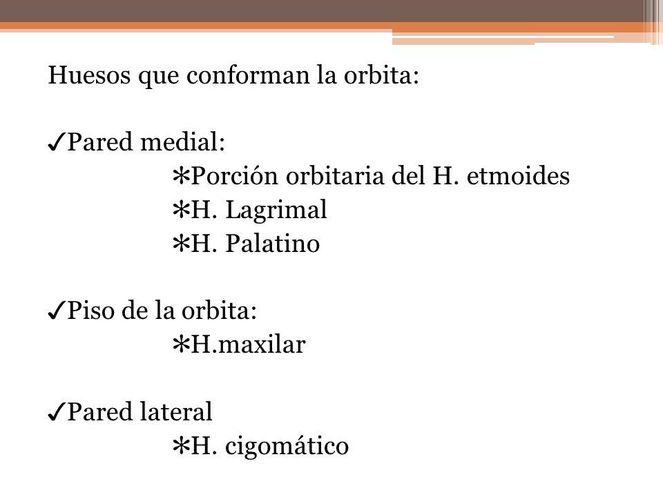 Huesos que conforman la orbita: Pared medial: Porción orbitaria del H. etmoides H. Lagrimal H. Palatino Piso de la orbita: H.maxilar Pared lateral H.