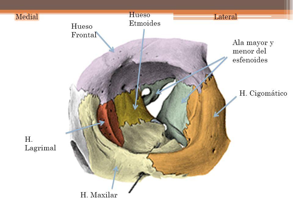 Hueso Frontal H. Maxilar H. Cigomático H. Lagrimal Hueso Etmoides Ala mayor y menor del esfenoides