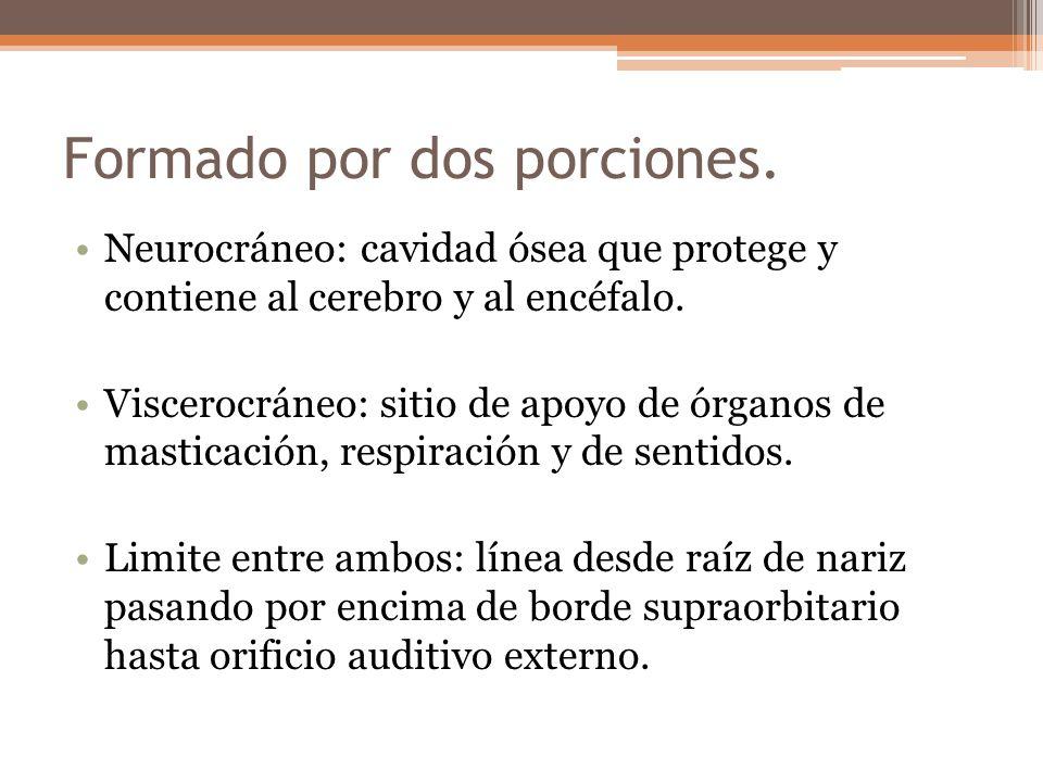Formado por dos porciones. Neurocráneo: cavidad ósea que protege y contiene al cerebro y al encéfalo. Viscerocráneo: sitio de apoyo de órganos de mast