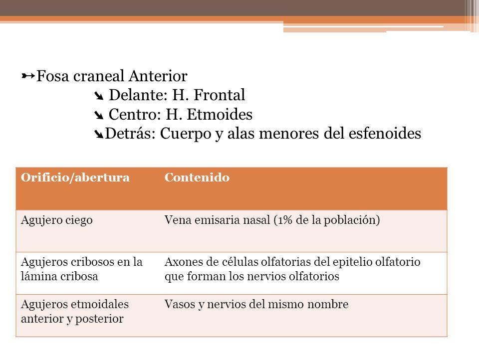 Orificio/aberturaContenido Agujero ciegoVena emisaria nasal (1% de la población) Agujeros cribosos en la lámina cribosa Axones de células olfatorias d
