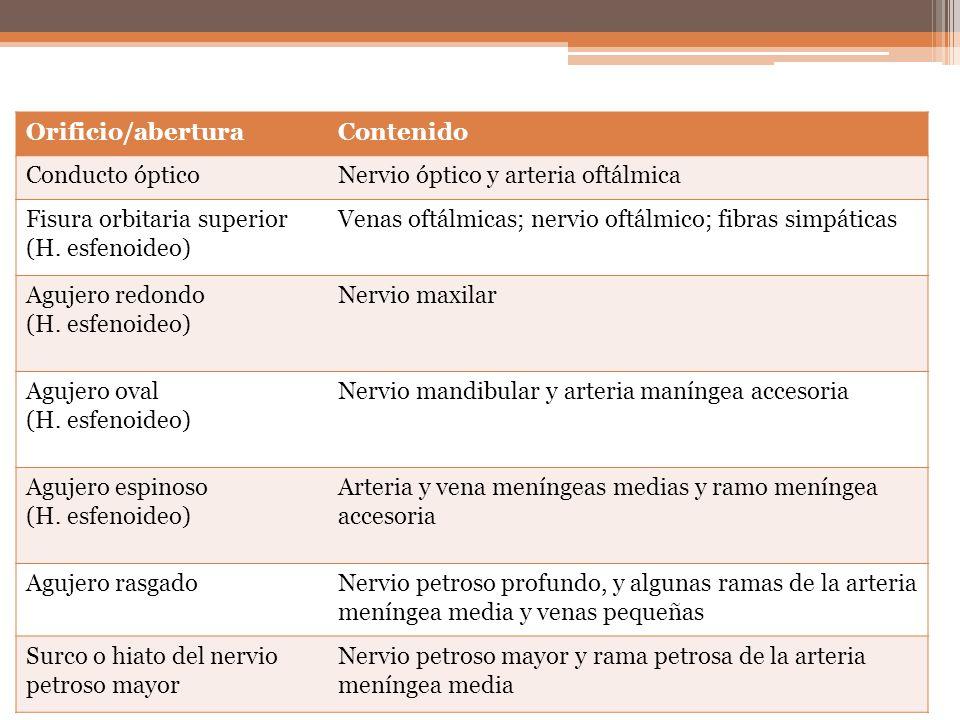 Orificio/aberturaContenido Conducto ópticoNervio óptico y arteria oftálmica Fisura orbitaria superior (H. esfenoideo) Venas oftálmicas; nervio oftálmi