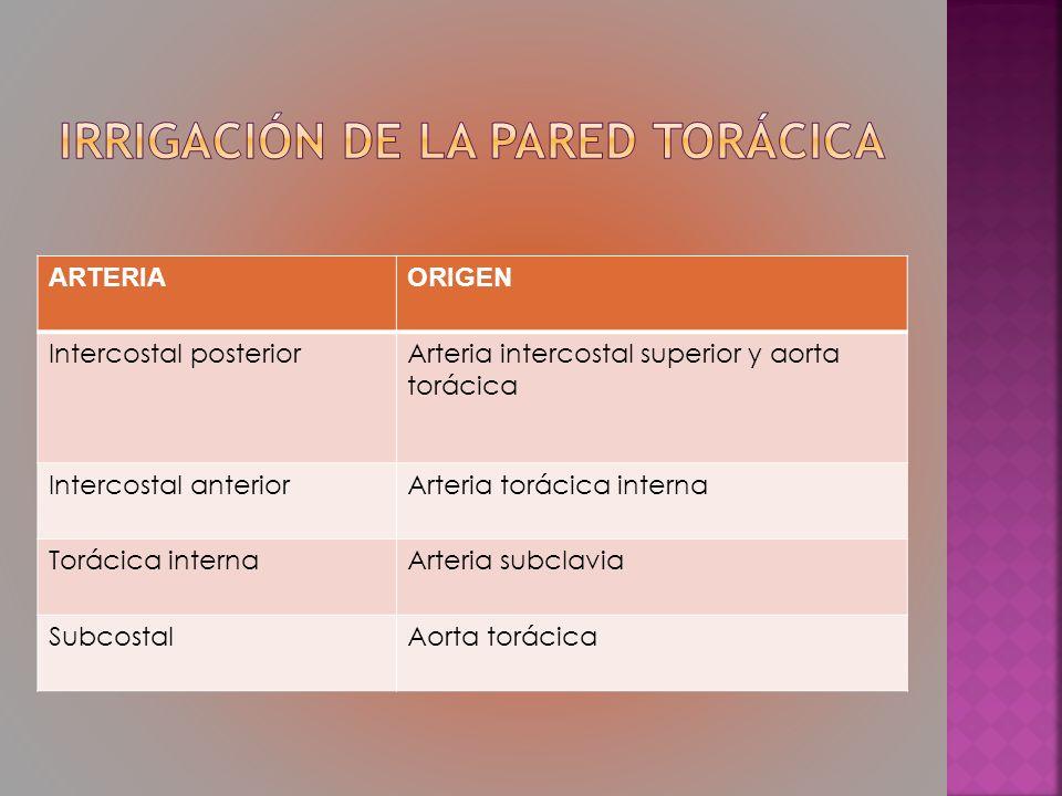 ARTERIAORIGEN Intercostal posteriorArteria intercostal superior y aorta torácica Intercostal anteriorArteria torácica interna Torácica internaArteria