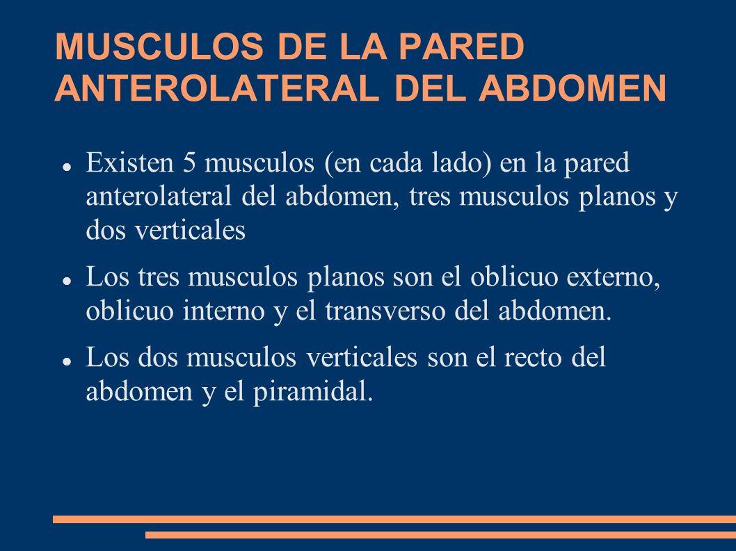MUSCULOS DE LA PARED ANTEROLATERAL DEL ABDOMEN Existen 5 musculos (en cada lado) en la pared anterolateral del abdomen, tres musculos planos y dos ver
